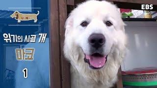 Download 세상에 나쁜 개는 없다 - 위기의 시골 개 마코 #001 Video