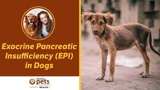 Download Exocrine Pancreatic Insufficiency (EPI) in Dogs Video
