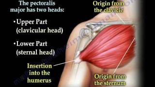 Download Pectoralis Muscle ,tendon Tear - Everything You Need To Know - Dr. Nabil Ebraheim Video