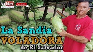 Download La Sandía Voladora de la Unión el Salvador Video