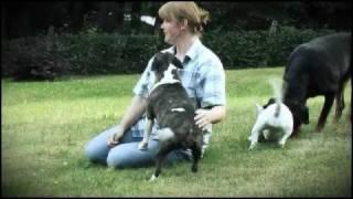 Download Miniatur Bullterrier Vom Emkental // Diana Lukas mit Ihren Mini Bullterrier Welpen Video