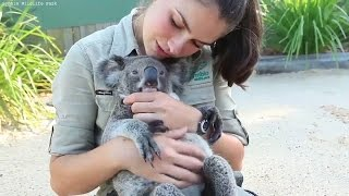 Download Koala Loves Cuddling and Hugging | Koala Funny and Cute Compilation Video