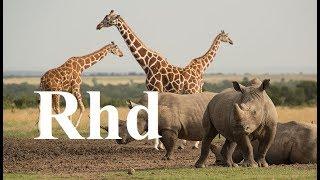 Download Zebra, Rhino, Giraffe, Crocs, Waterberg, (part 2) Nature 2018 HD Documentary. Video