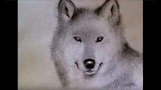 Download ♡ How to Draw Realistic Wolf (for beginners!) Video