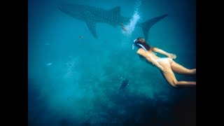 Download WHALESHARK ALMOST ATE ME - OSLOB CEBU - PHILIPPINES TRAVEL Video