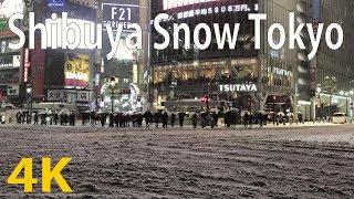 Download [4K60fps] Tokyo Snow (Shibuya Crossing) [Japan Travel Guide] Video