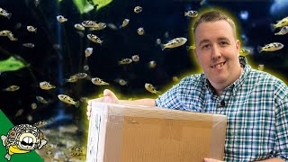 Download UNBOXING NEW FISH - 350 PEA PUFFERS, GIANT CLOWN LOACH, HUGE ORANDA GOLDFISH Video