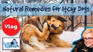 Download How to Cure Dogs Itchy Skin! 8 Natural Remedies for Itchy Dogs, Cure Skin Irritation! Video