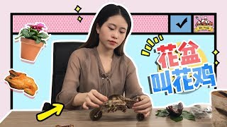 Download E15 Roasting Chicken in Flowerpot? More delicious than you ever thought | Cooking in office Video