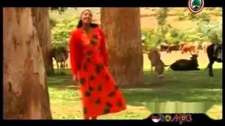 New Oromo Music 2015 Hawwii Tezera Free Download Video MP4 3GP M4A