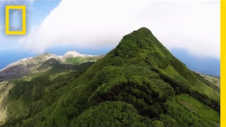 Download Once, This Island Had Just One Tree—Look at It Now   National Geographic Video