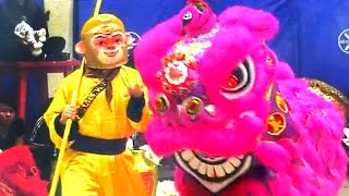 Download 2016 Monkey and Lion Dance Performance - Boston Chinatown Main Street Community & Competition Event Video