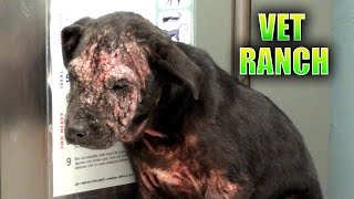 Download Sad Homeless Puppy Transformed! Video