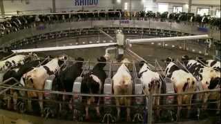 Download Fazenda Colorado em Araras 70 mil litros por dia Video