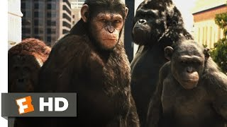Download Rise of the Planet of the Apes (2011) - Attack on San Francisco Scene (3/5) | Movieclips Video