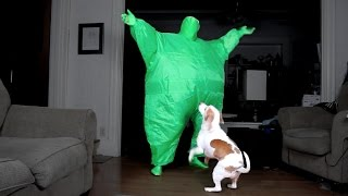 Download Dog Dances w/Man in Chub Suit: Funny Dog Maymo Video