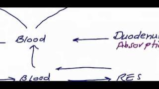 Download usmle step1 hematology 1 video Video