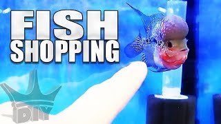 Download SHOPPING FOR NEW FISH!!! Video