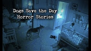 Download 4 Scary Stories Where Dogs Saved the Day Video