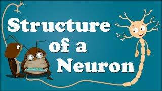 Download Structure of a Neuron | #aumsum Video