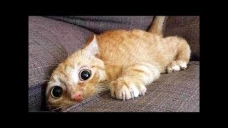 Download Top 200 Funny Animals Vines || FunnyVines Video