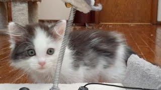 Download Kitten Close Up 2017-10-18 Video