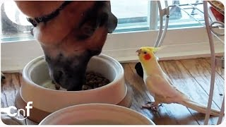 Download Bird Sings to Dog During Lunch | Meal Time Serenade Video