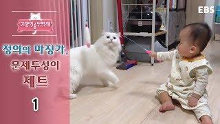 Download 고양이를 부탁해 - 정의의 마징가, 문제투성이 제트 #001 Video