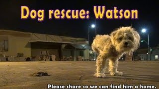 Download Dog rescue: Watson, the three legged dog - Please share and help us find him a home. Video