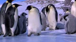 Download Penguin Fail - Best Bloopers from Penguins Spy in the Huddle (Waddle all the Way) Video