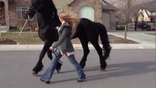 Download Going for a stroll with my Friesian Stallion, Apollo! :) Video