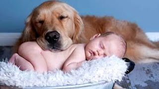 Download Best Of Funny Cats And Dogs Love Babies Compilation 2015 || NEW Video