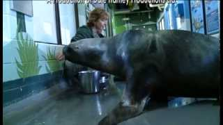 Download Careers In Veterinary Medicine, For The Love of Animals Video