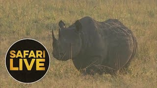 Download safariLIVE: The Gauntlet - Episode 2 - August 04, 2018 Video