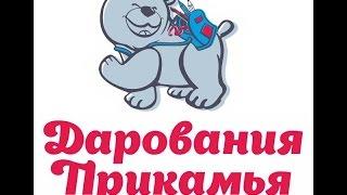 Download конкурс-фестиваль ″Дарования Прикамья″, номинация ″Песня″ Video
