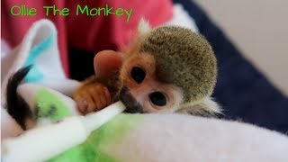 Download Baby Monkey oLLie | Tiny Taste Test Video