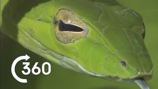Download Costa Rican Jungle 360° - Planet Earth II - Behind The Scenes Video