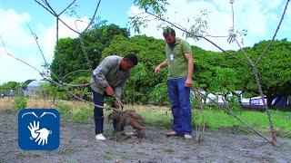 Download Projeto do Centro de Ciências Agrárias promove a preservação da mandioca Video
