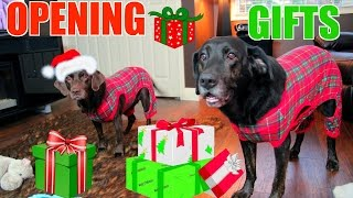 Download Dogs Opening Christmas Presents In Onesies 🎄 Video