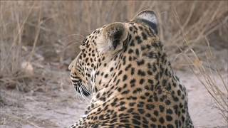 Download The little chief Hosana has returned! Video