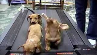 Download Cute Dogs (Americas Funniest Home Videos / AFV) Video