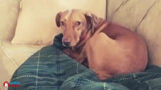 Download Riprendono il loro cane solo in casa: quando guardano le riprese non possono credere ai loro occhi Video