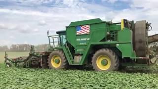 Download Cucumber Harvest in 4K! Video