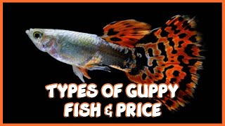Download Different types of Guppy & Prices in India Video