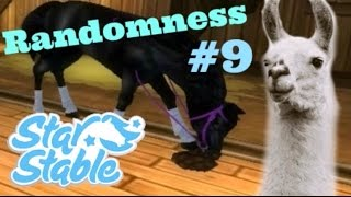 Download Randomness #9 | Star Stable Online Video