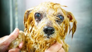 Download AMAZING! This dog was found inside a garbage container, we had to saved him ! Video