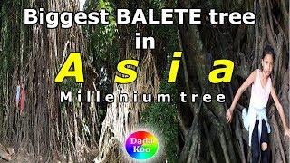 Download Part - 5, BALER, Aurora tour/sightseeing 2019. Millenium tree, Brgy. Quirino, Aurora Province Video