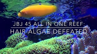 Download How To Defeat Hair Alage - Reef Tank Update Video