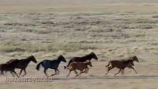 Download Gökte Tanrı Yerde Biz Delikanlı Türkleriz Video