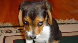 Download GUILTY DOGS - Funny Dogs Compilation Video